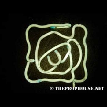 Neon-Rental-Swirlly
